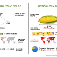 Artificial vs Natural Watermelon & Sweetcorn