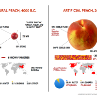 Artificial vs Natural Peach
