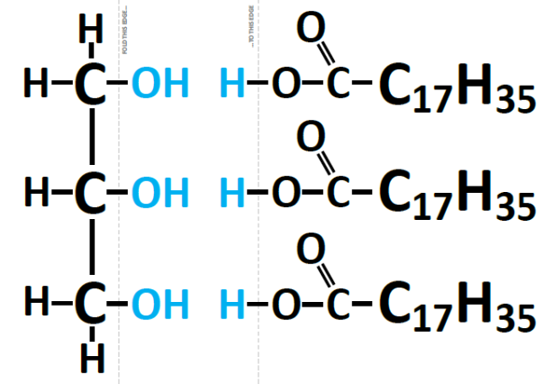 Hydrolysis (or formation) of a triglyceride