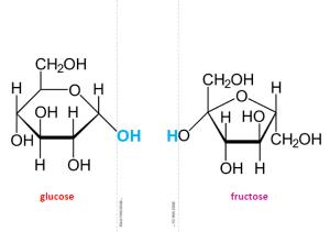 foldable biomolecule: triglyceride