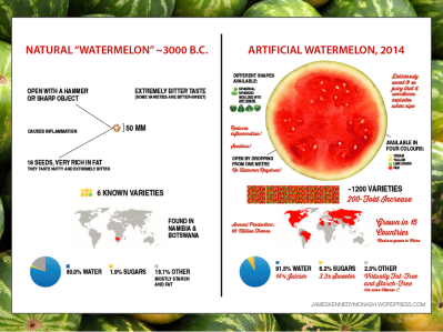 infographic watermelon